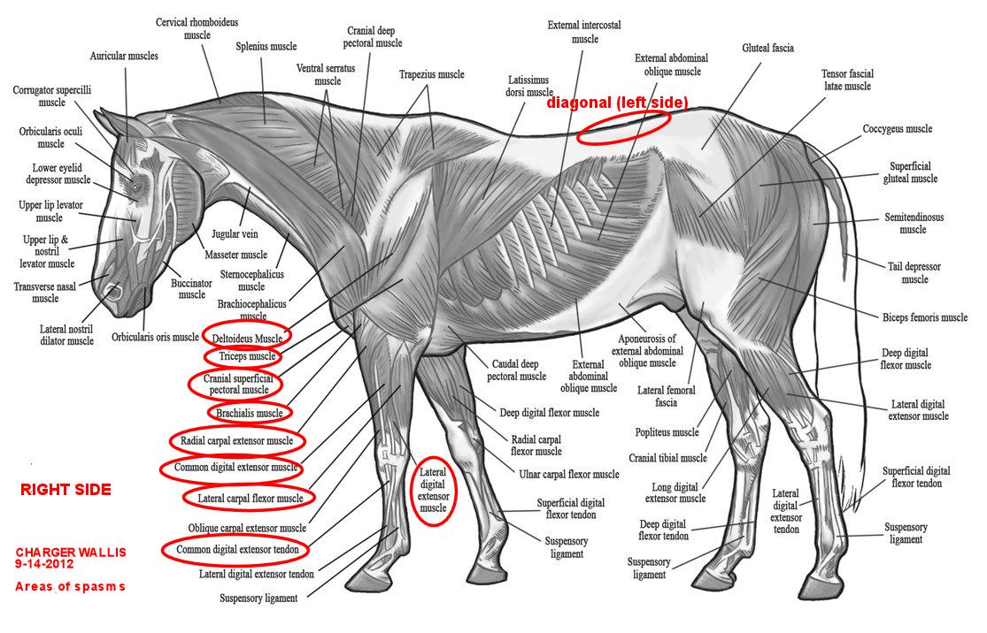 Penzance Bodyworks For Horses Training Horses Naturally