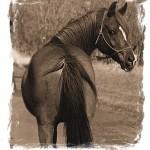 horsesrunningaway