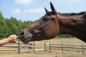 horsesmellingEO